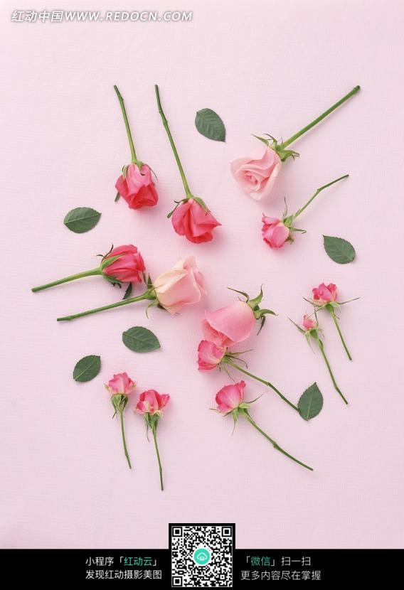 摆放在粉色桌面上的粉玫瑰图片