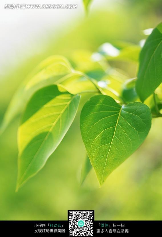 阳光下的树叶图片素材图片