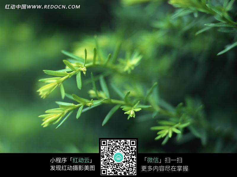 树枝上细小的叶子图片图片