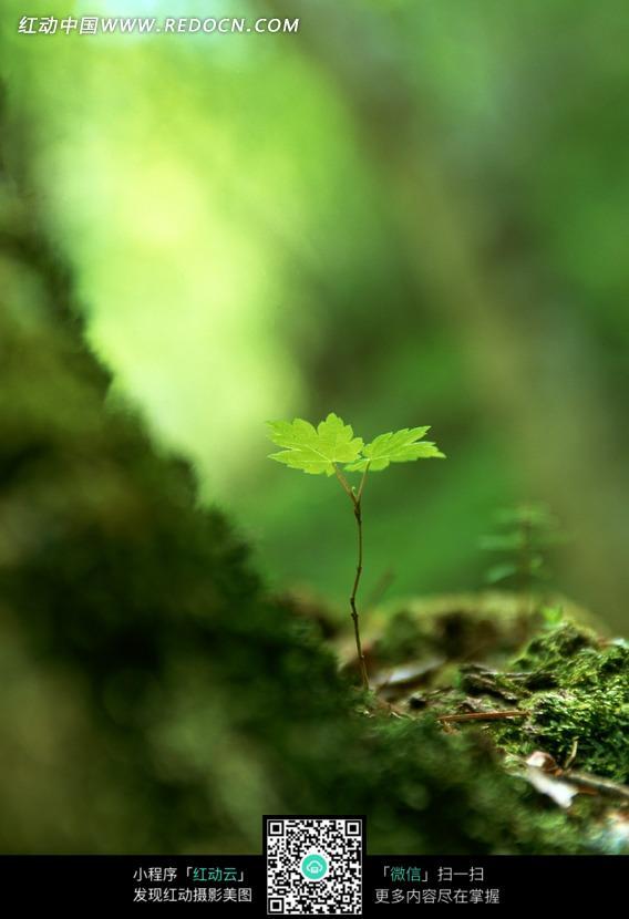 树根边的嫩绿叶子图片