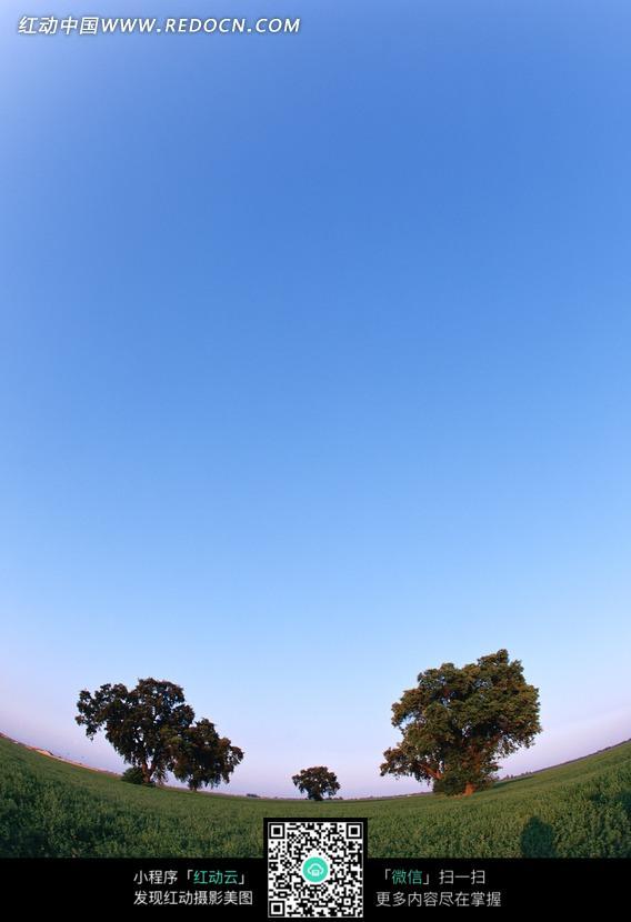 蓝天草地树木图片_自然风景图片