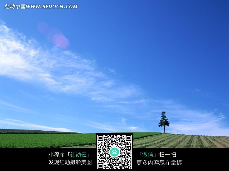 蓝天白云下绿色田野上的树木图片