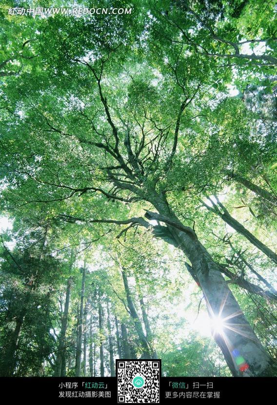 勃勃_生机勃勃的树林