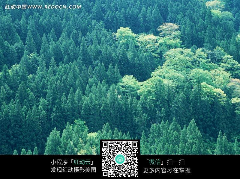 生机勃勃的茂盛森林_花草树木图片