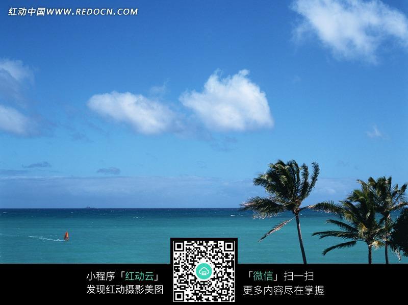 蓝天白云下大海上的小船和岸边的椰树图片