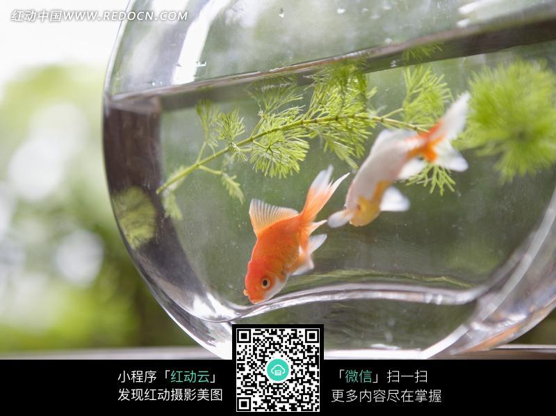 石头风景鱼缸图片大全