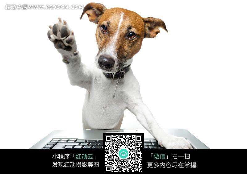 创意按电脑的狗狗图片