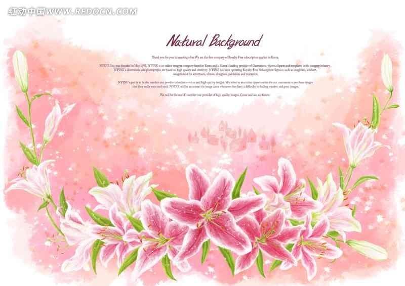 手绘 粉色 百合花 婚纱照背景素材