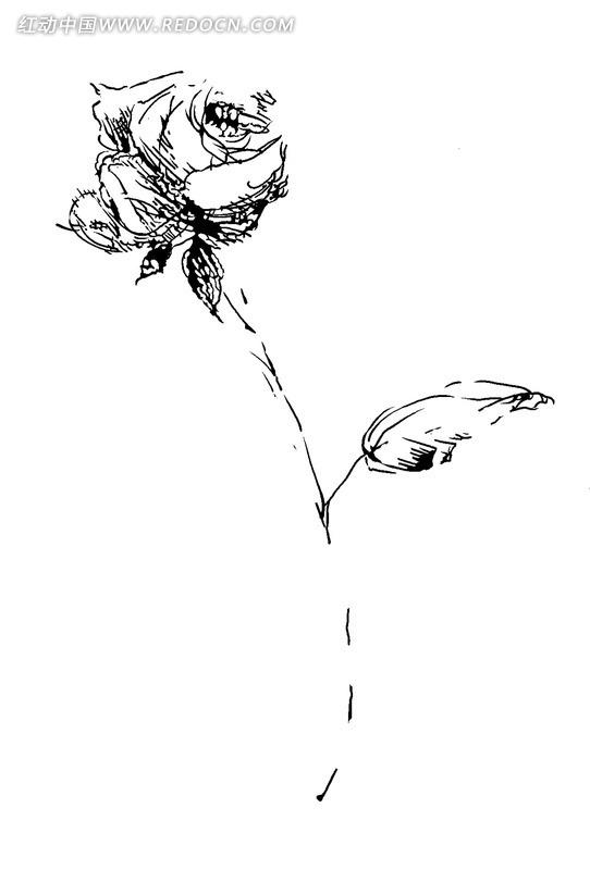 黑白玫瑰花朵psd素材