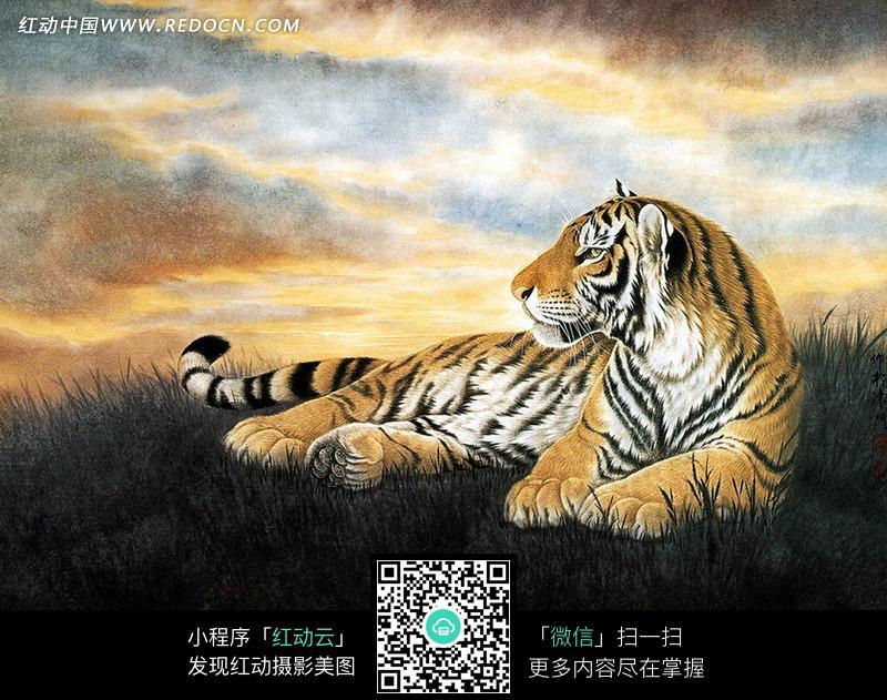 在草地休息的老虎图片