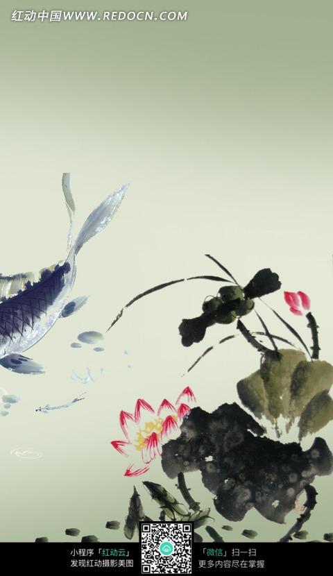 中国画-荷花荷叶和小鱼图片