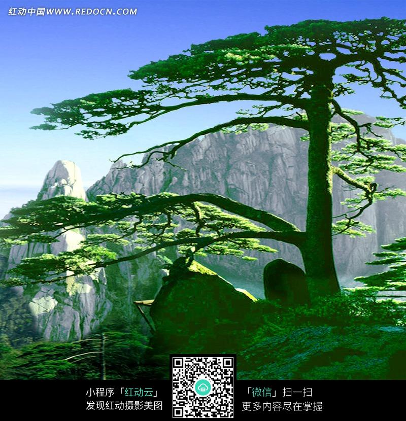高山青松风景画图片图片