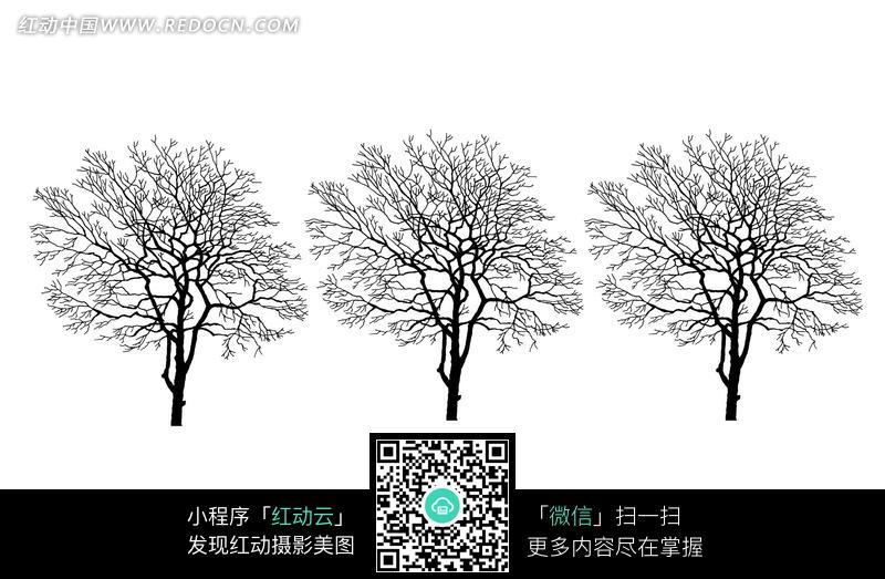 三棵黑白线描树木