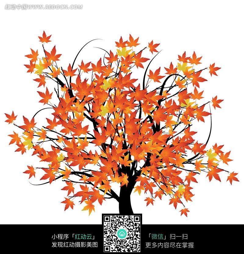 手绘枫树图片