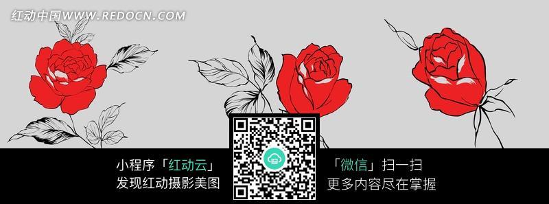 手绘 火红玫瑰 玫瑰花  无框画 装饰画 植物图片 植物 摄影图片 植物图片