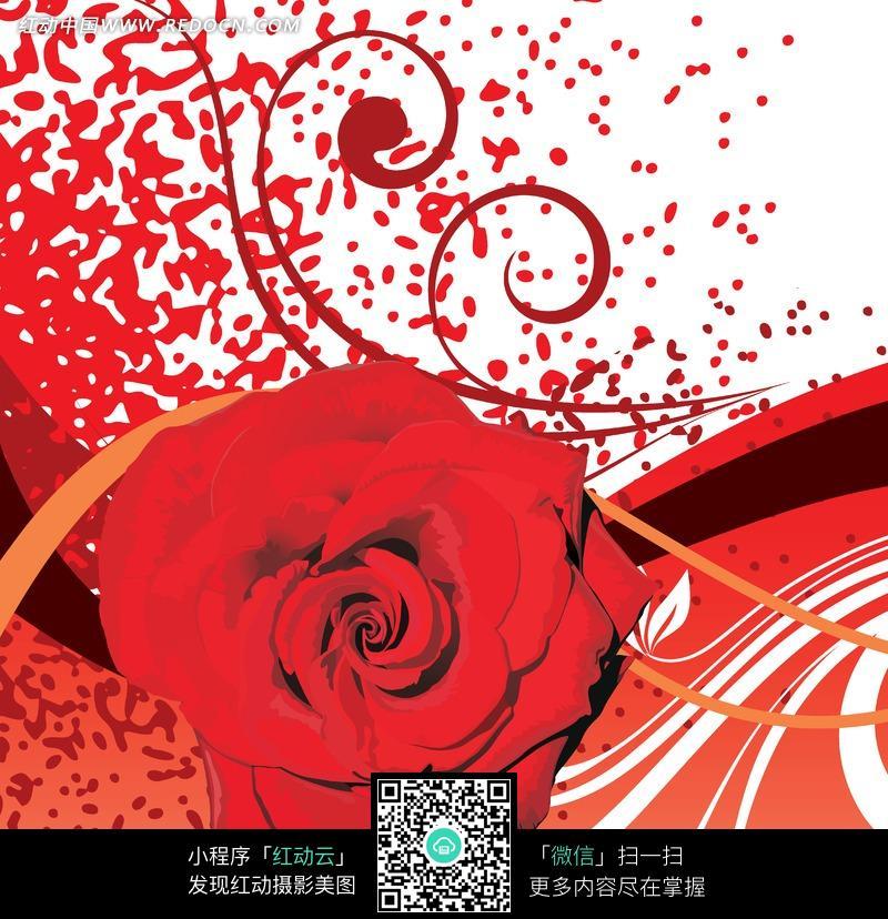 手绘藤蔓纹红玫瑰图片