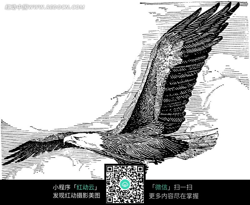 黑白线条展翅高飞的雄鹰