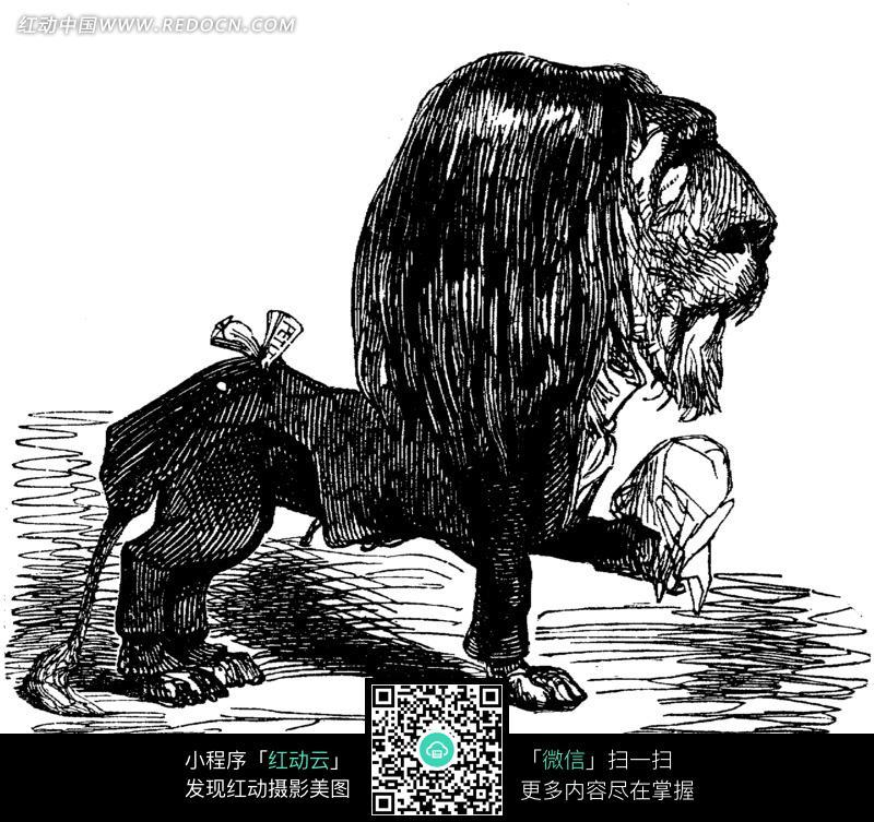 手绘狮子黑白素描插画