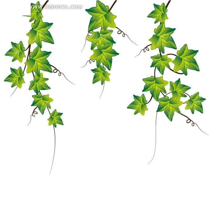 手绘藤蔓绿色星形叶子