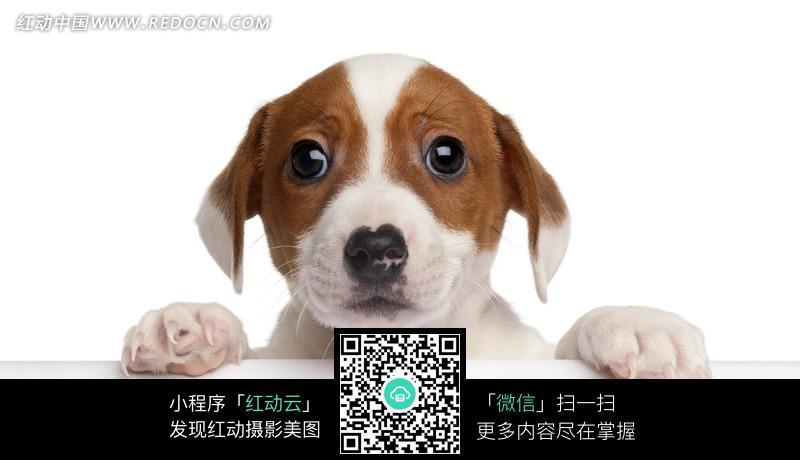 可爱狗狗摄影图片_陆地动物图片