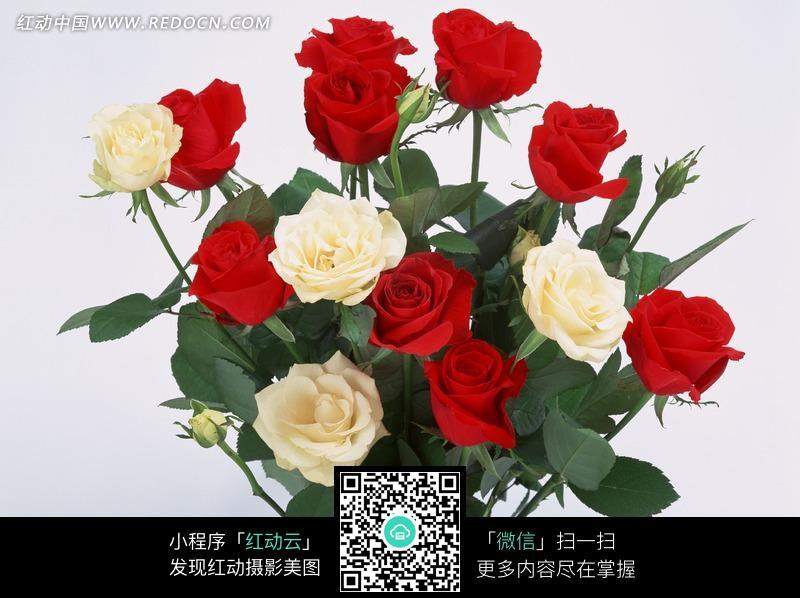免费素材 图片素材 生物世界 花草树木 一束漂亮的红色和白色玫瑰花