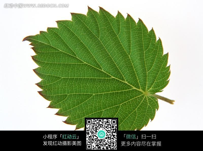 树叶包带子的编织方法