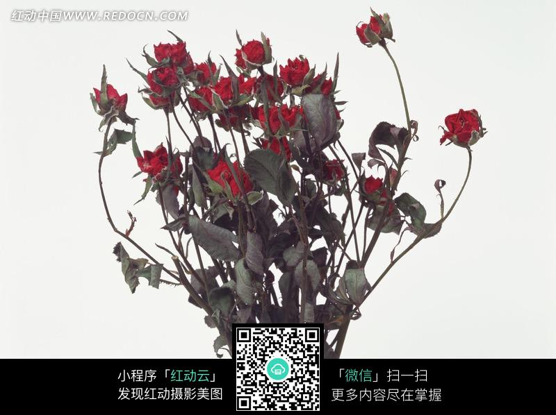 叶子枯萎的一束玫瑰花图片