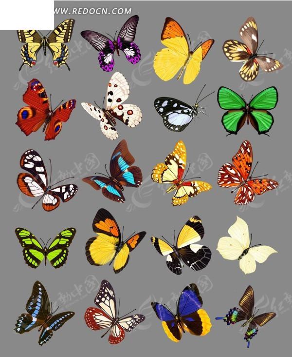高清偷拍泳装商城的更衣室性粉嫩的女孩138mbmp42501vv_各种颜色花纹的蝴蝶