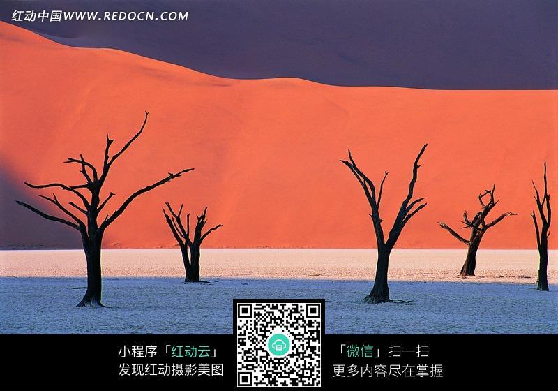 白色沙滩上的干枯的树木图片