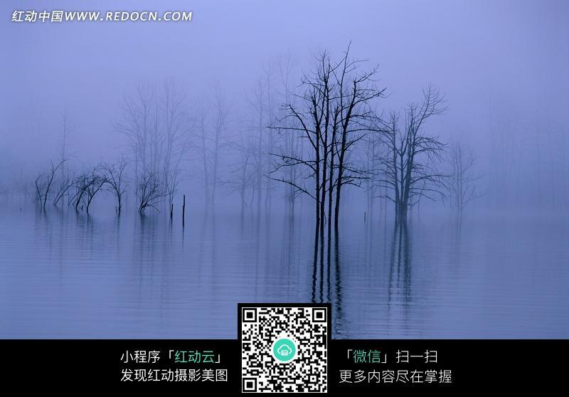 免费素材 图片素材 自然风光 自然风景 雾气弥漫的湖面和水中的枯树