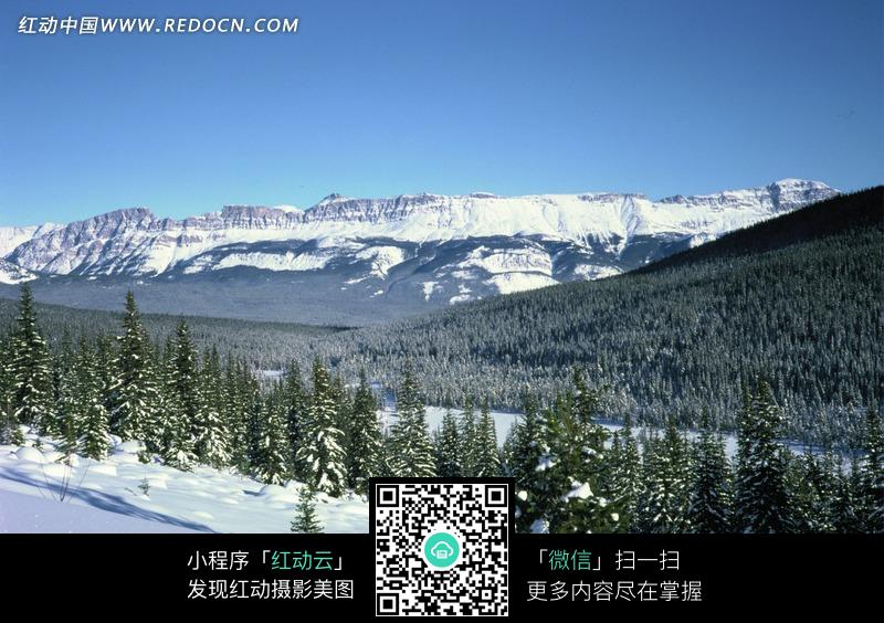 山坡 树林 蓝天图片