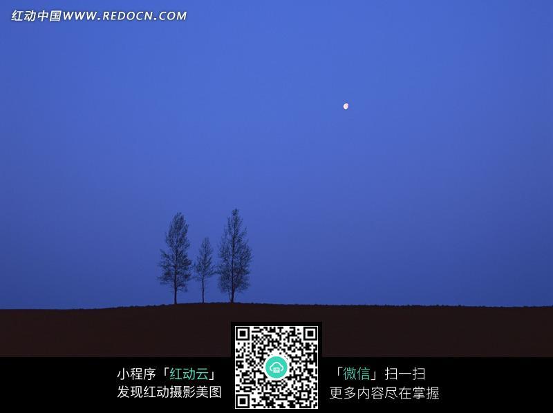 树木和天空中的月亮图片