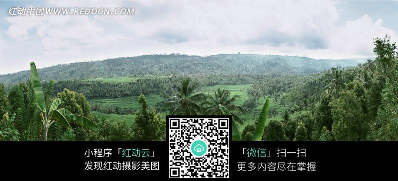 绿色的树林和远处的山脉图片