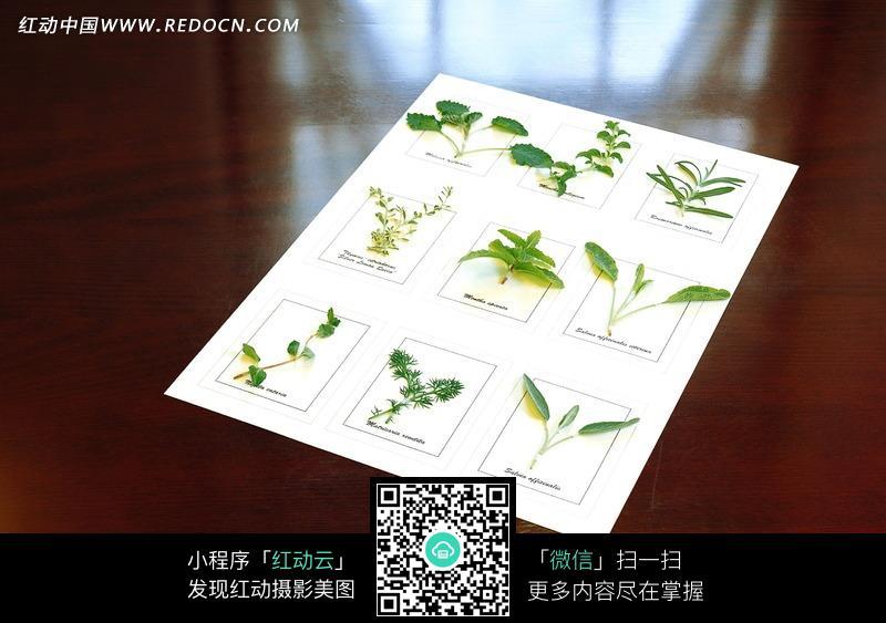 白纸上的绿色植物叶子标本图片图片