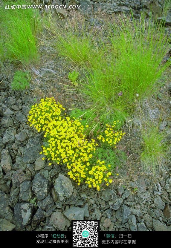 石头植物动物图片