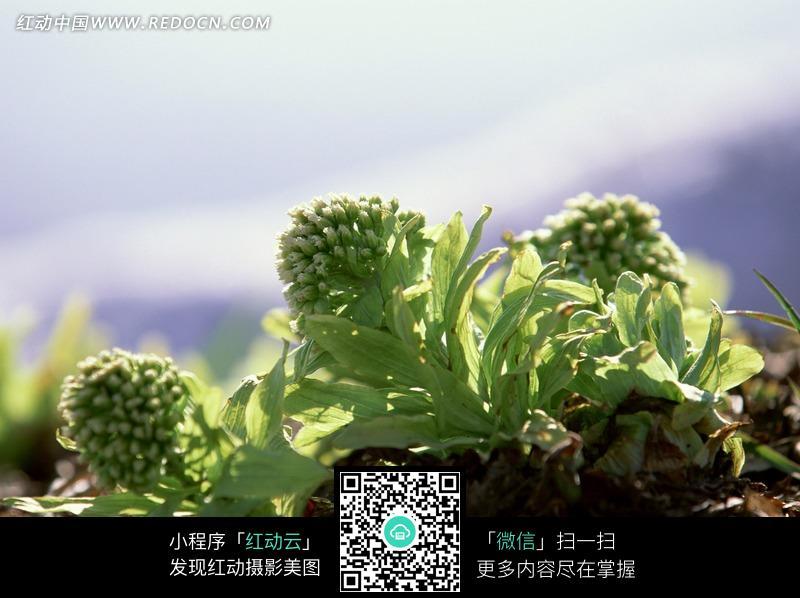 阳光下的绿色植物图片