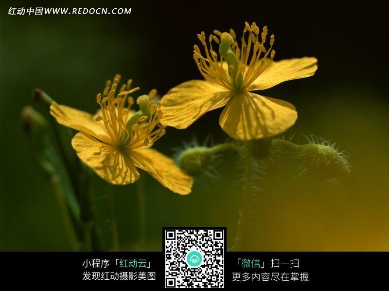 素材描述:红动网提供花草树木精美素材免费下载,您当前访问素材主题是四片花瓣的黄色花朵,编号是1357395,文件格式JPG,您下载的是一个压缩包文件,请解压后再使用看图软件打开,图片像素是2950*2094像素,素材大小 是667.58 KB。