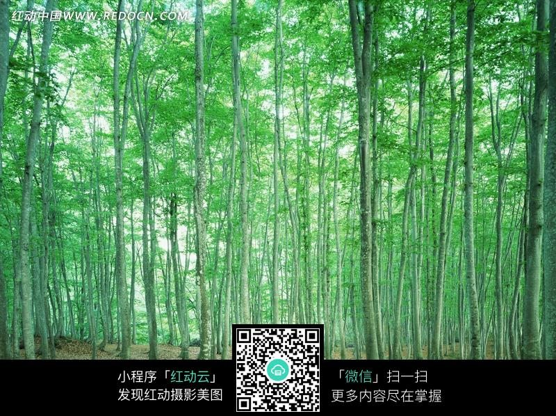 绿色美丽的茂密树林