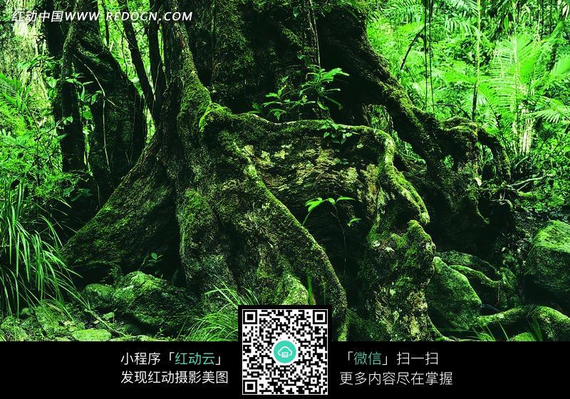 长满小草的树根图片免费下载 红动网