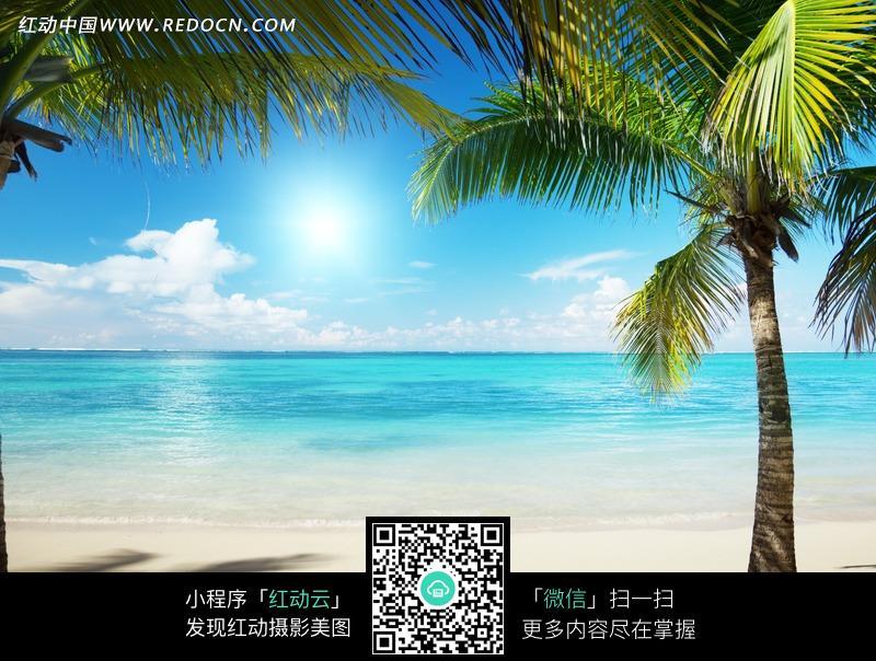 蓝色海边沙滩上的椰子树_自然风景图片