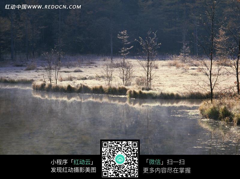 河边的枯草地和树木图片_自然风景图片