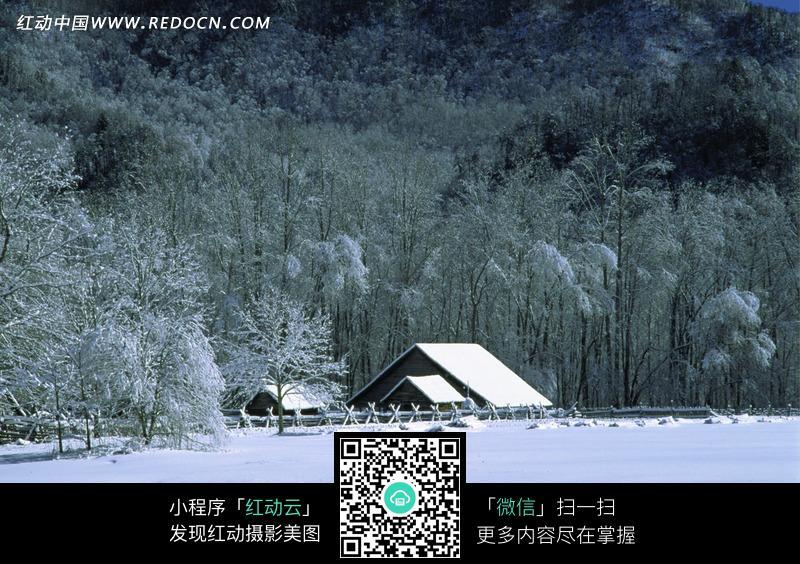 冬天的雪地树林和小屋图片