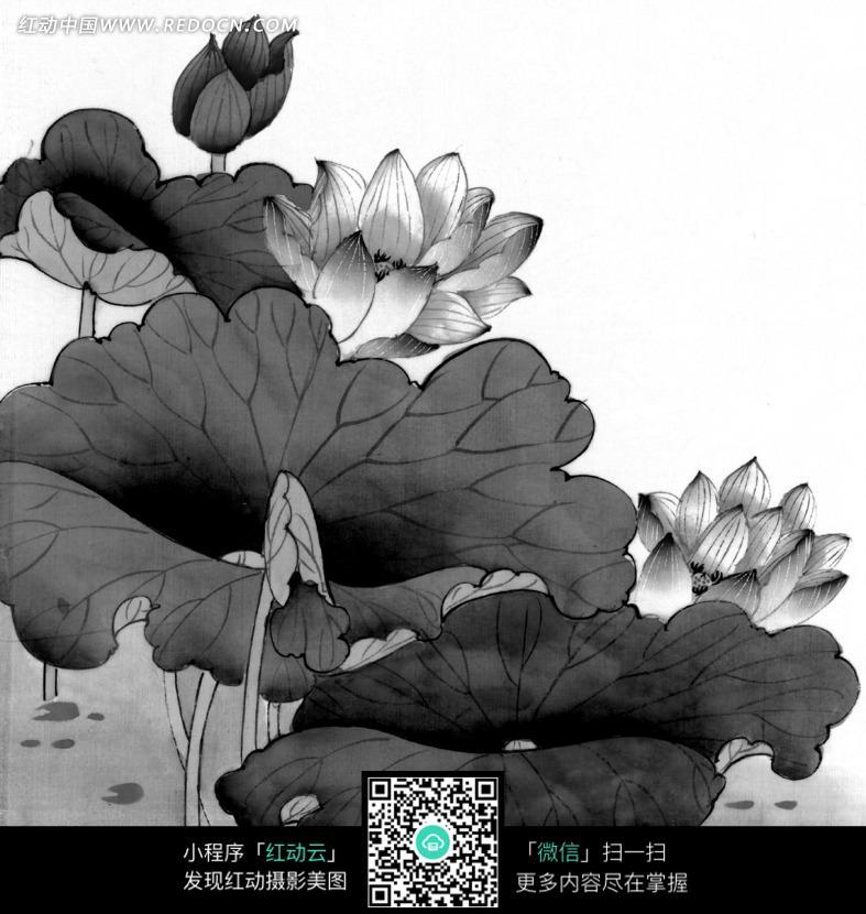 荷叶 盛开的荷花 花苞 工笔画 绘画 艺术 水墨画 花鸟画 中国画 书画-工