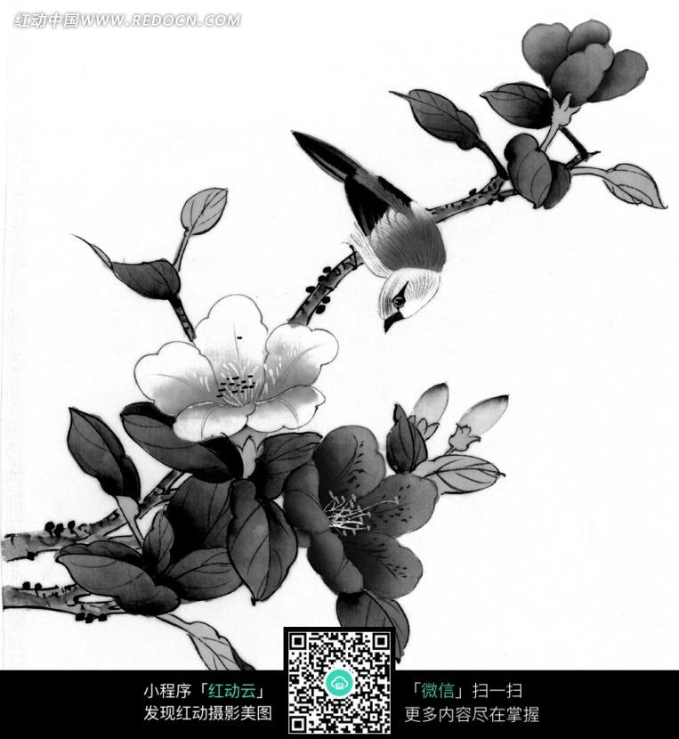 工笔画之枝头的鸟和盛开的花朵
