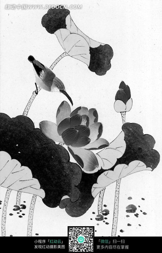 工笔画之荷叶叶茎上的鸟和盛开的荷花