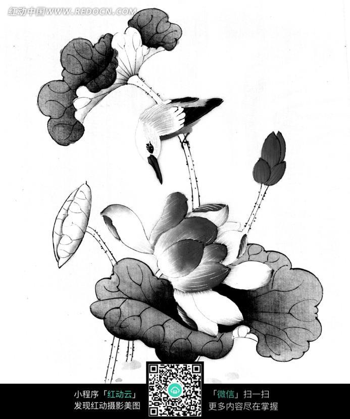 工笔画之荷叶叶茎上回过头的鸟