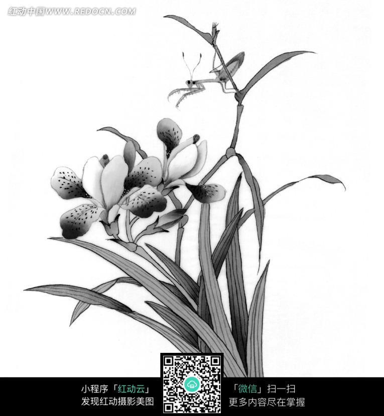 工笔画—兰花边的螳螂