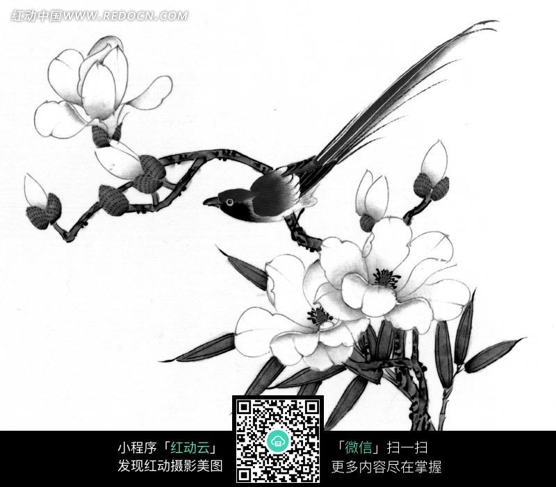 工笔画—盛开着花朵的树枝上的鸟