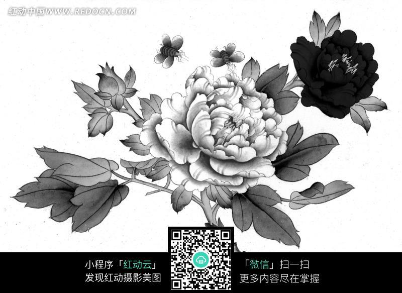 手绘黑白色调牡丹花与蜜蜂