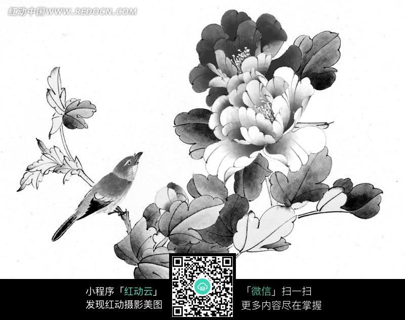 工笔画—树枝上的鸟和盛开的牡丹花图片